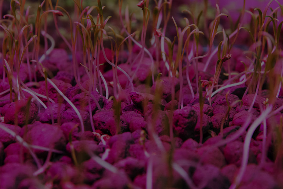 letto di crescita in coltivazione acquaponica
