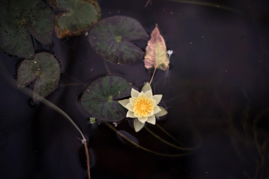 fiore in coltura fuorisuolo