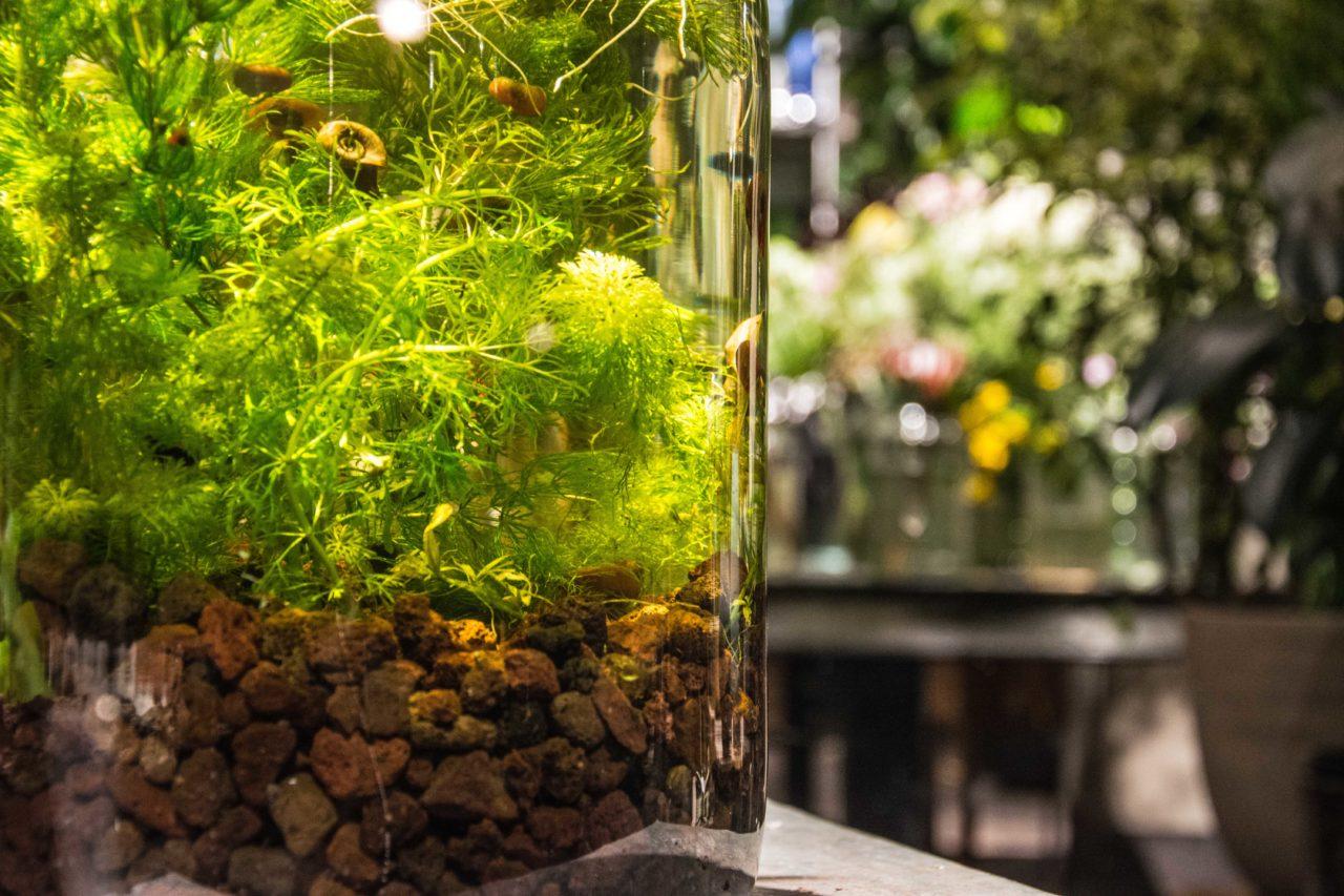 dettaglio coltivazione acquaponica in vetro