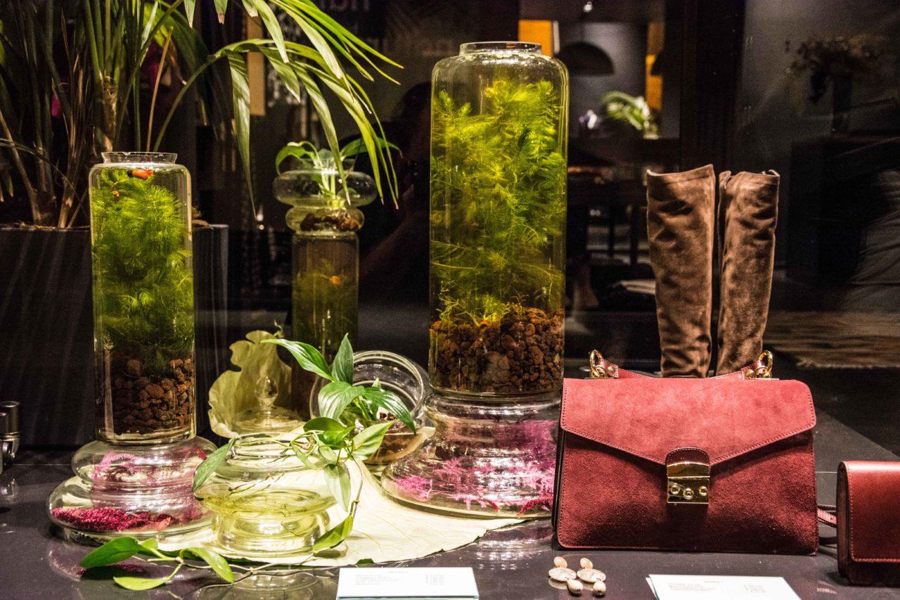 coltivazione acquaponica in campana di vetro