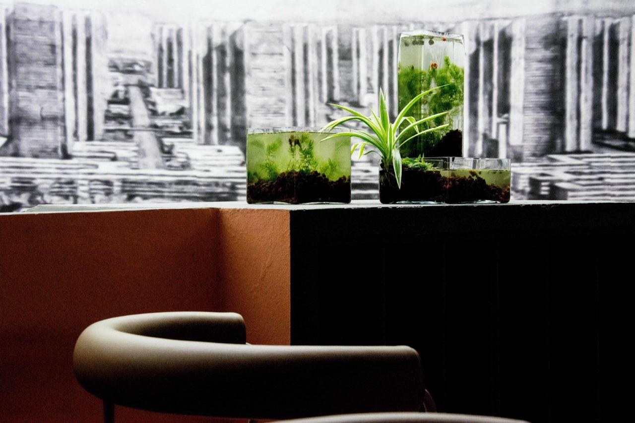 impianto acquaponico per bologna design week