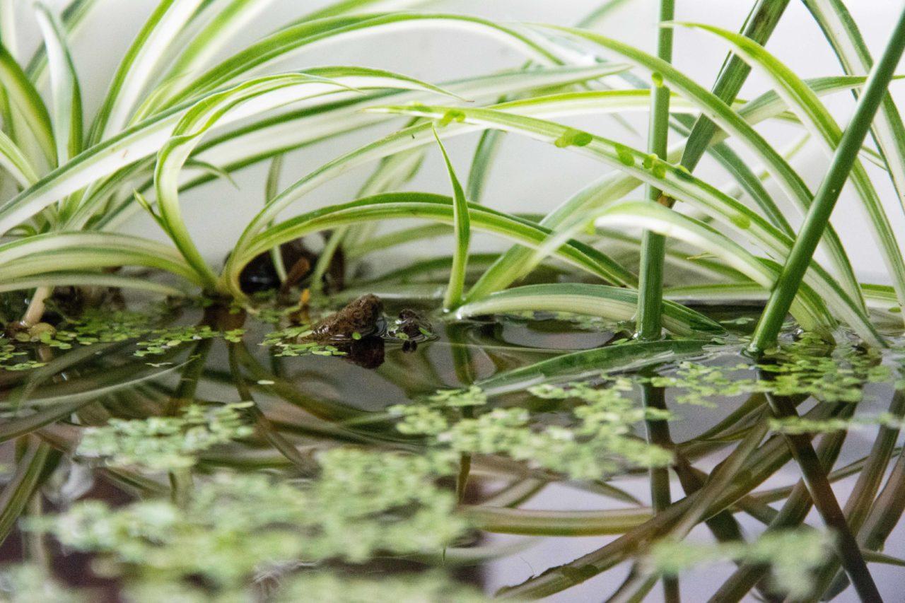 piante con pesce in impianto acquaponico