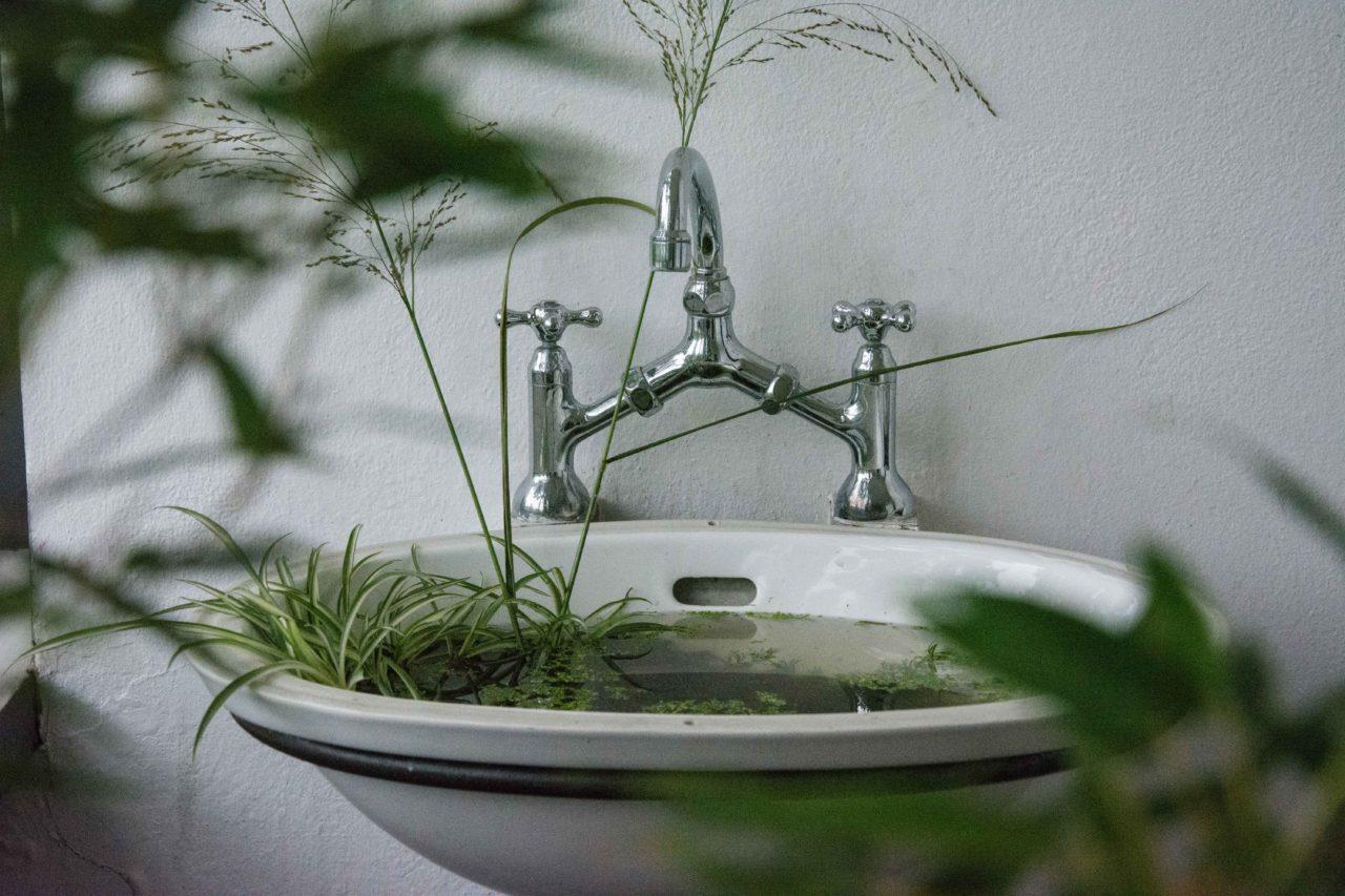 lavandino con piante in acquaponica